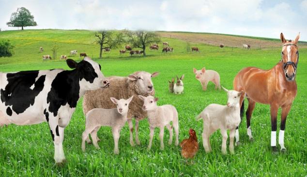 SIPACE alargado à alimentação animal
